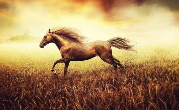 Los 5 mejores libros de doma de caballos