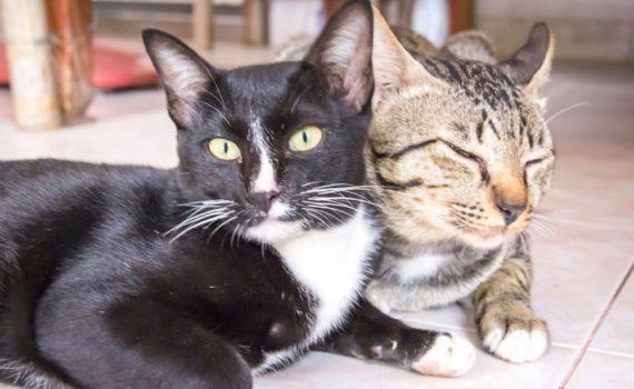 Los 5 mejores libros de gatos