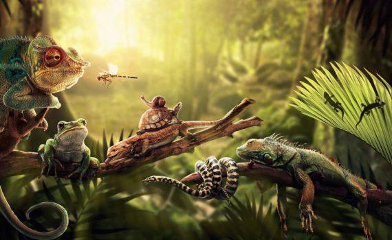 Los 5 mejores libros de reptiles