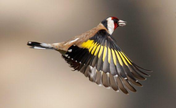 Los 5 mejores libros para la identificación de aves