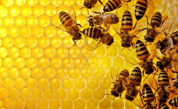 Los 5 mejores libros sobre abejas