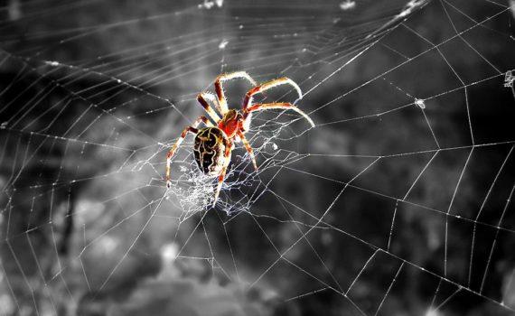 Los 5 mejores libros sobre arañas