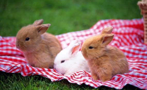 Los 5 mejores libros sobre conejos enanos