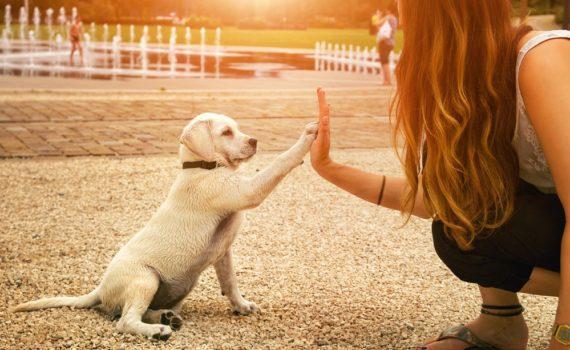 Los 5 mejores libros sobre educación de perros