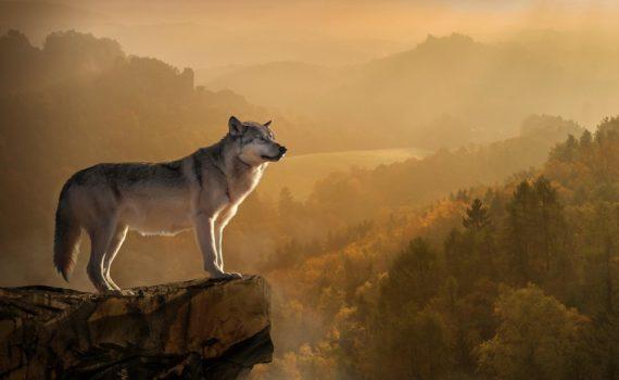 Los 5 mejores libros sobre lobos