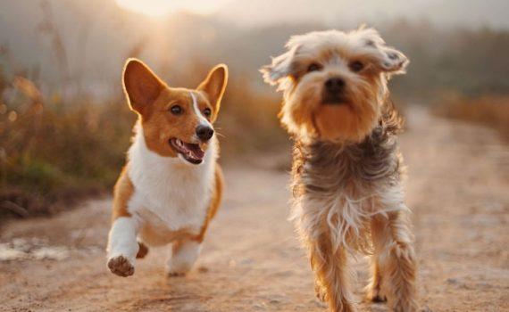 Los 5 mejores libros sobre razas de perros