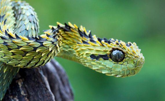 Los 5 mejores libros sobre serpientes