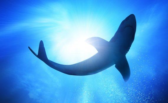 Los 5 mejores libros sobre tiburones